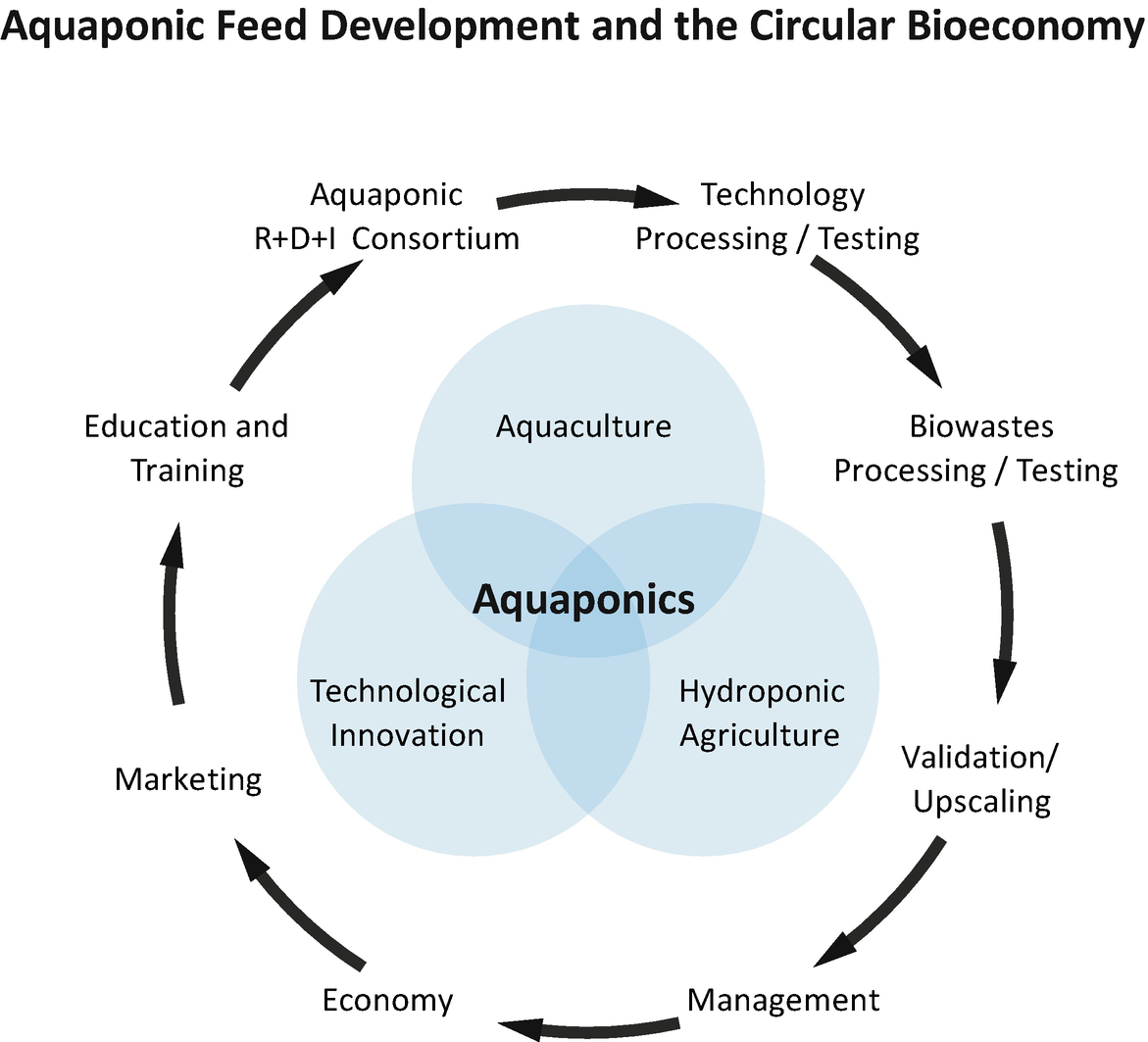 Fish Diets in Aquaponics | SpringerLink