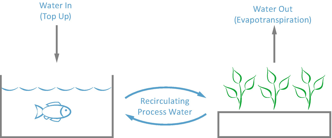 Aquaponics: The Basics   SpringerLink