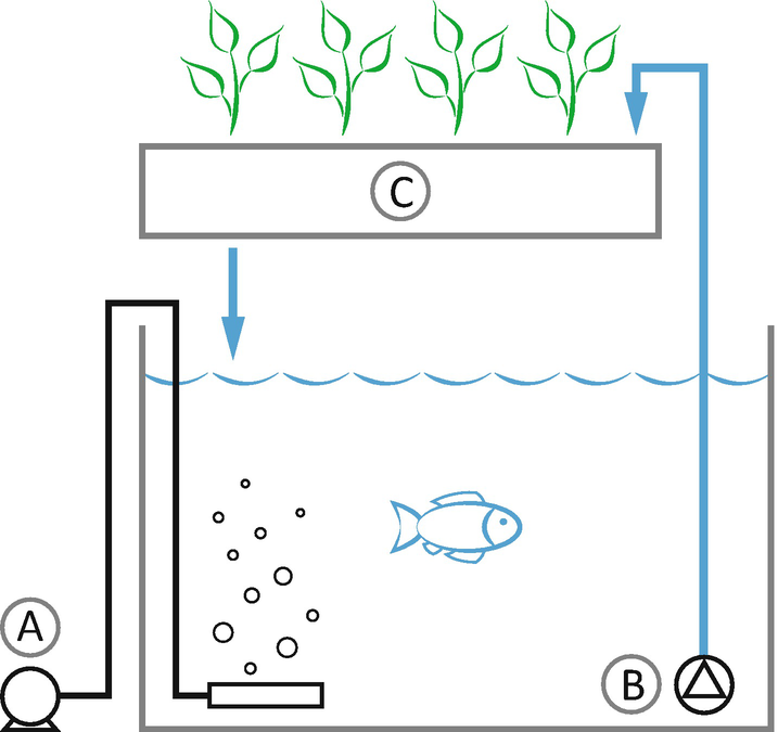 Coupled Aquaponics Systems | SpringerLink