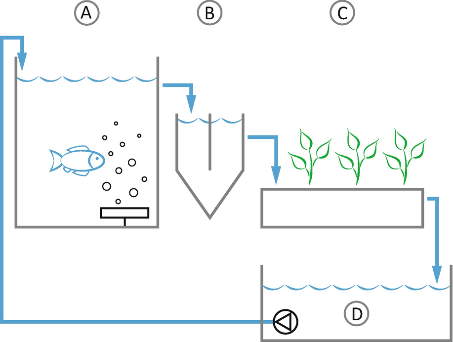 Coupled Aquaponics Systems | SpringerLink