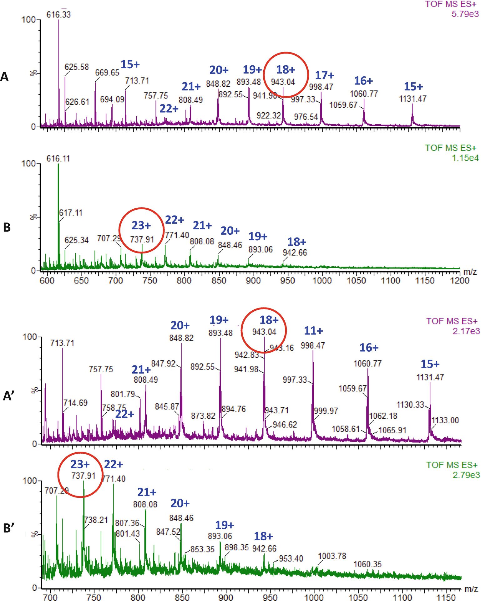 Mass Spectrometry- and Computational Structural Biology-Based