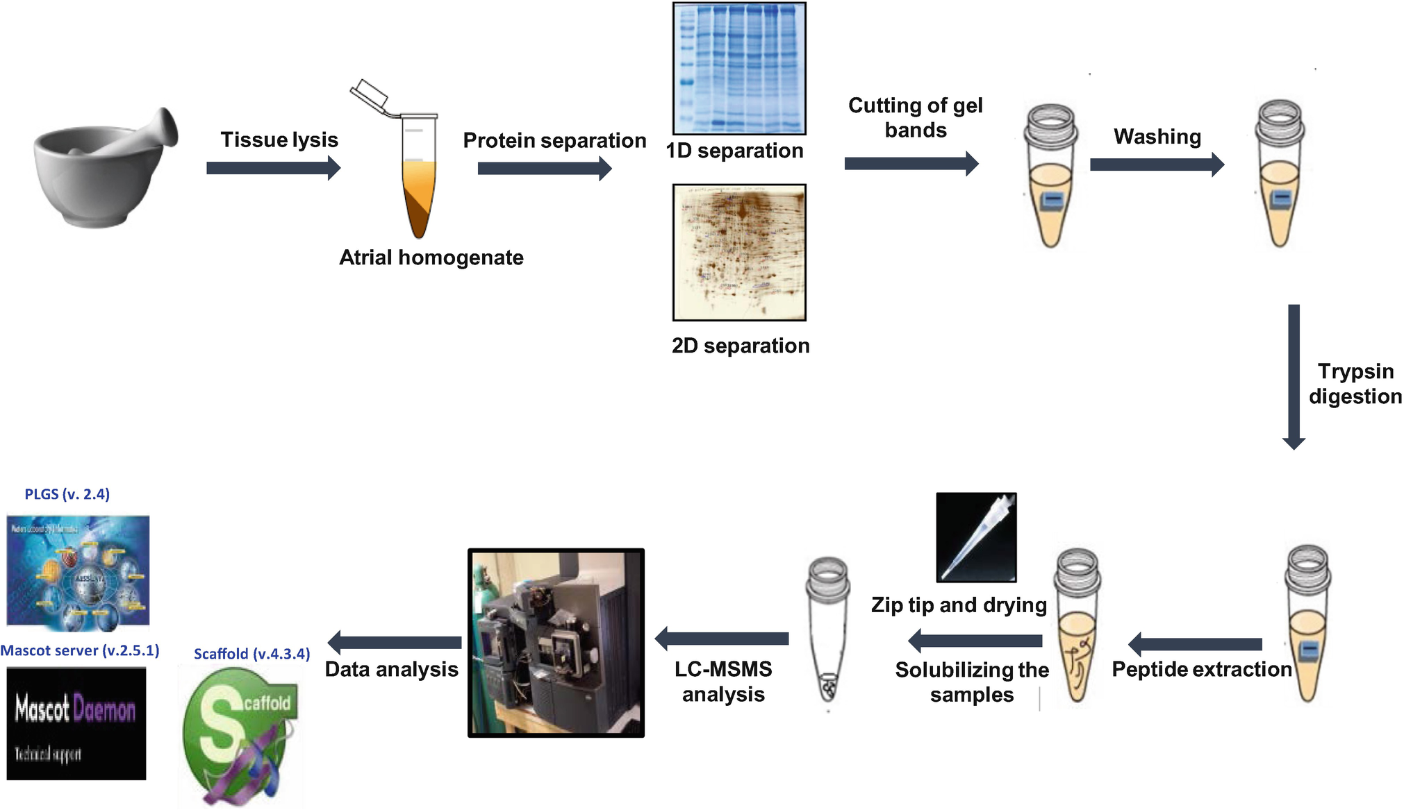 Mass Spectrometry Based Comparative Proteomics Using One