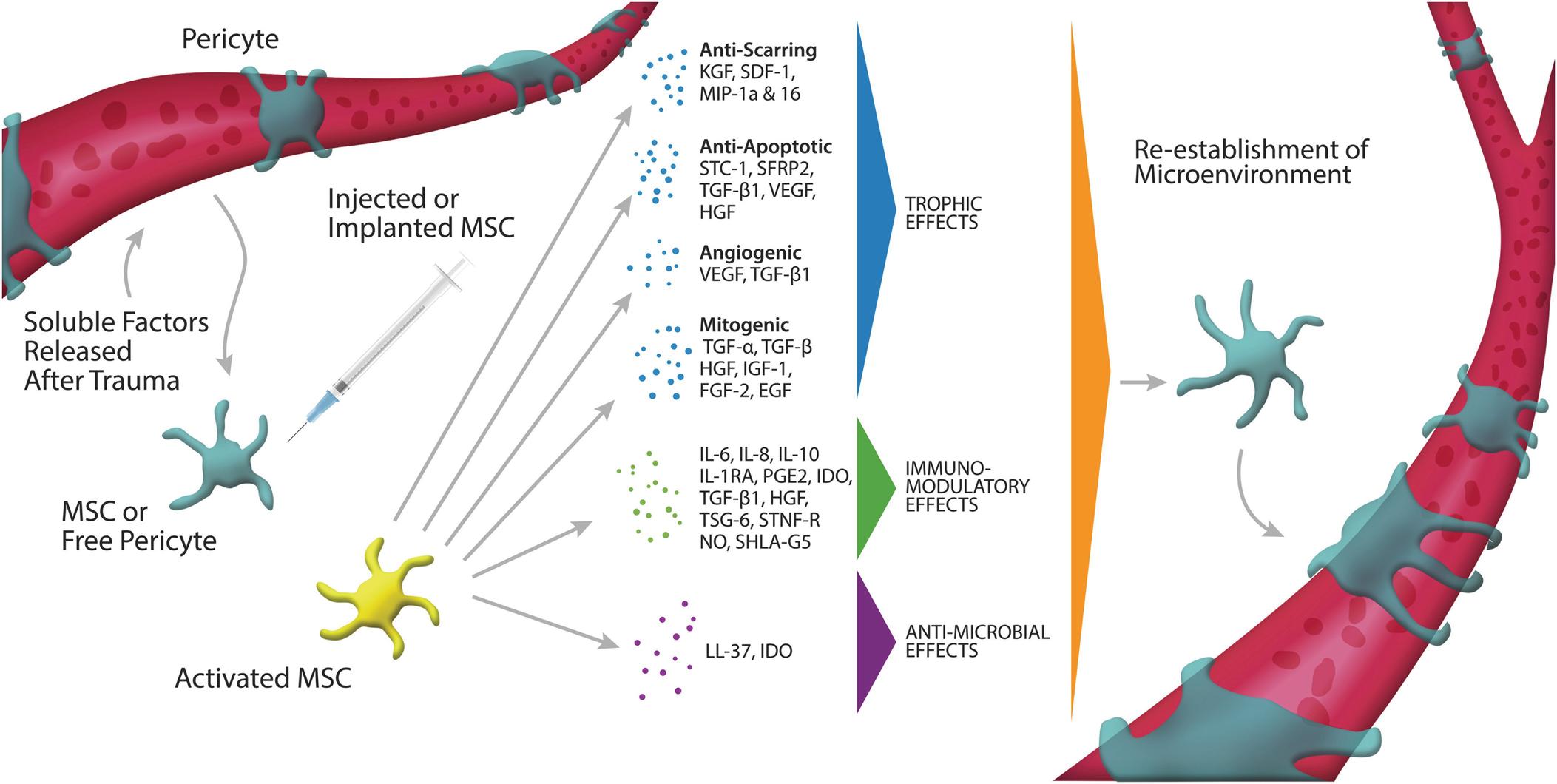 The Future of Cartilage Repair | SpringerLink