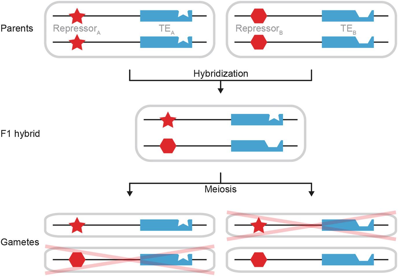 Repetitive DNA: The Dark Matter of Avian Genomics | SpringerLink