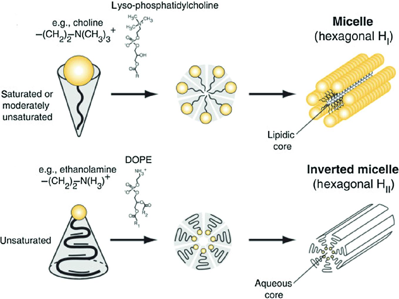 Phospholipids in Cosmetic Carriers | SpringerLink