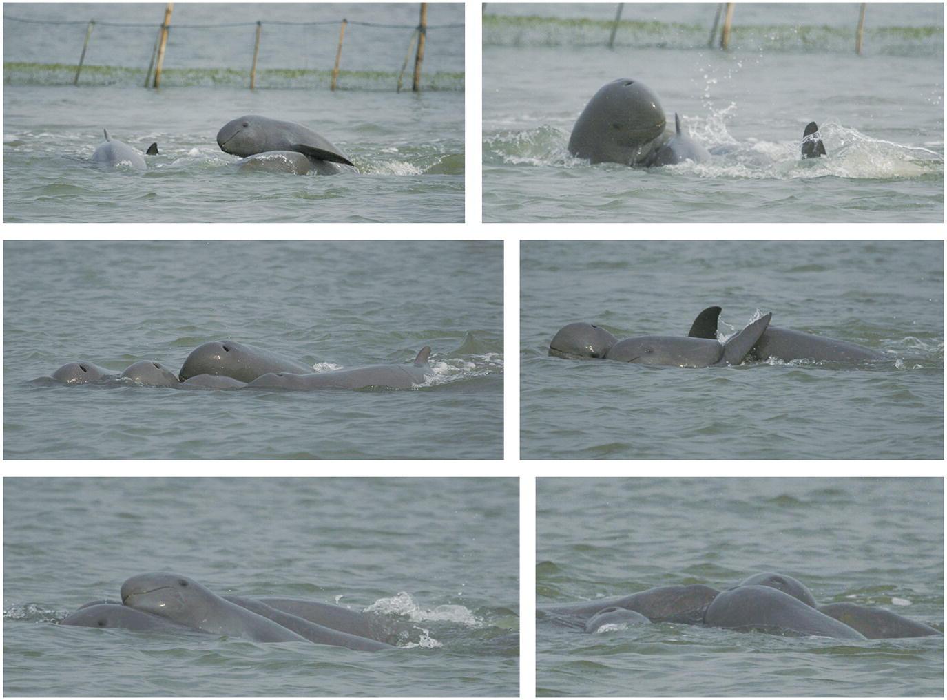 Cetacean Sociality in Rivers, Lagoons, and Estuaries