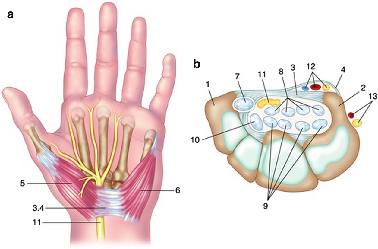 Hand Function in Common Hand Problems | SpringerLink