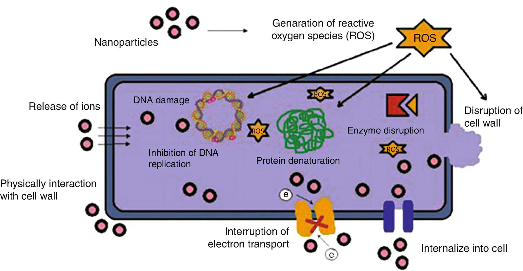 Oxidative Stress Reduction (Prong-3) | SpringerLink