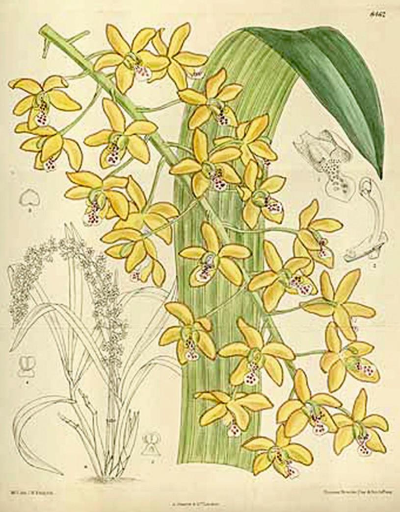Medicinal Orchids of South America | SpringerLink