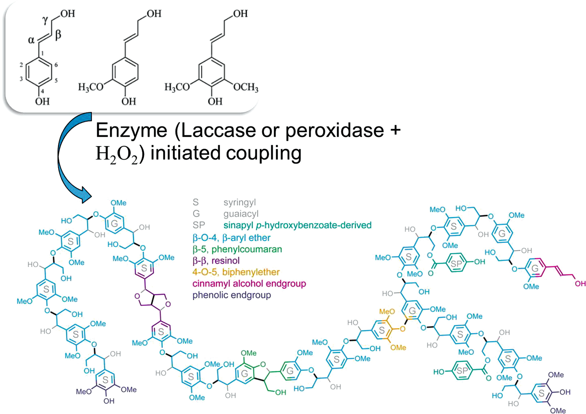 Chemistry and Structure of Lignin | SpringerLink
