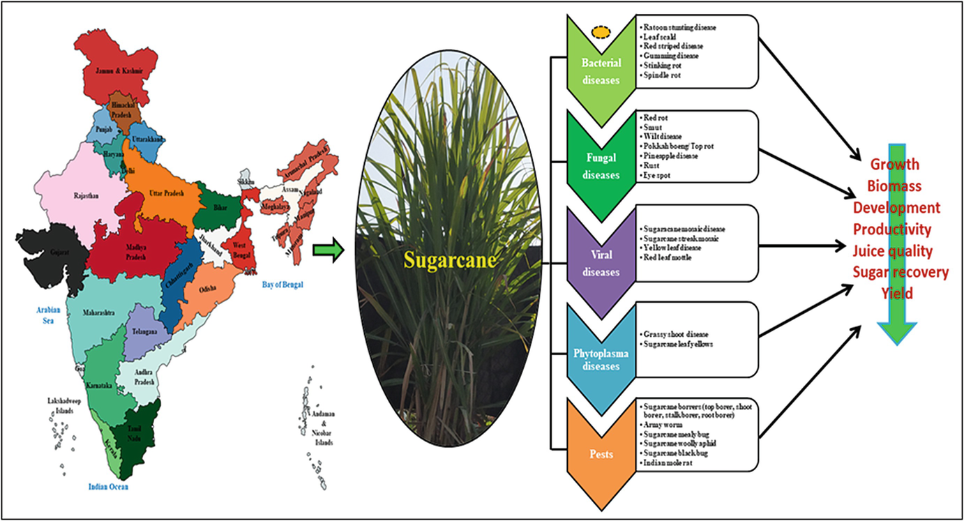 Molecular Breeding Approaches for Disease Resistance in