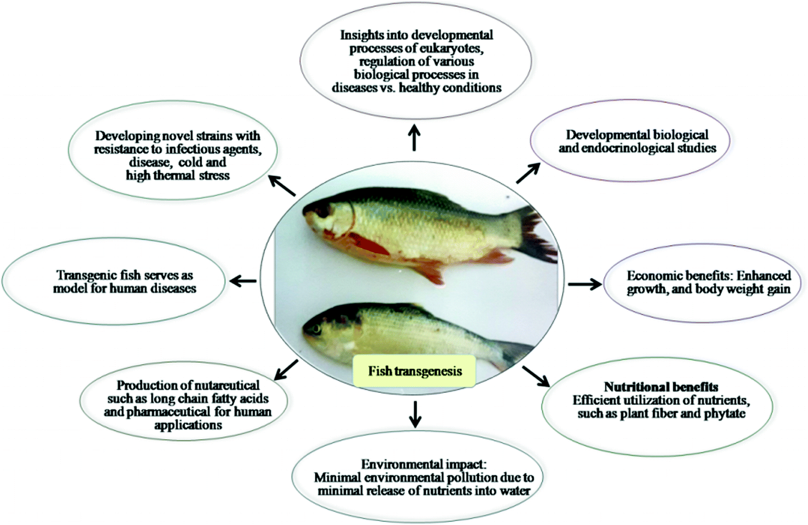 Transgenic Fish | SpringerLink