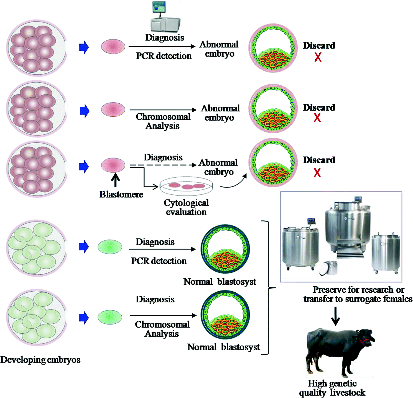 Revolutionary Reproduction Biotechnologies in Livestock: An