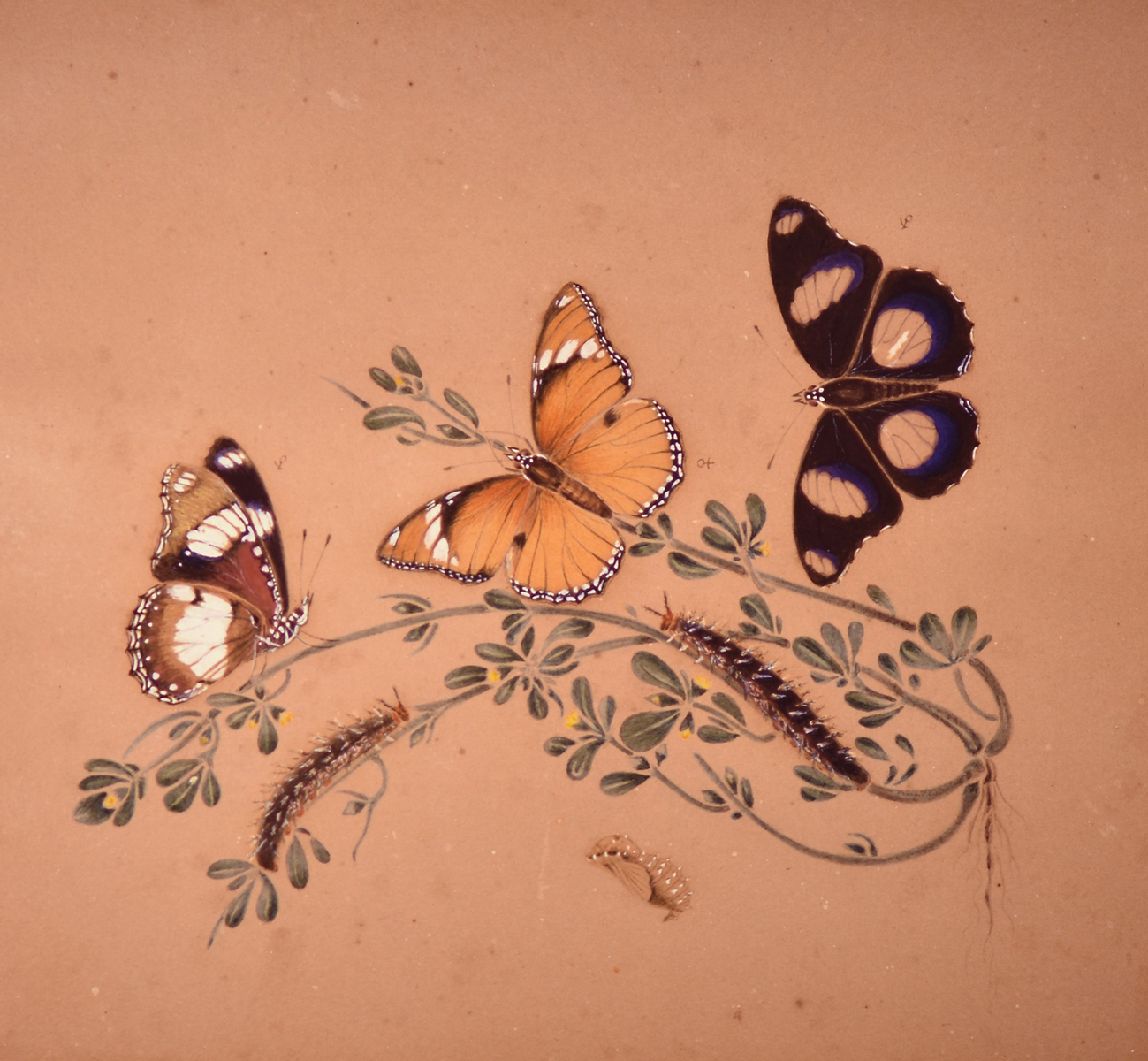 Illuminated Hide A Key Garden Animal Friend Butterfly Barbara King