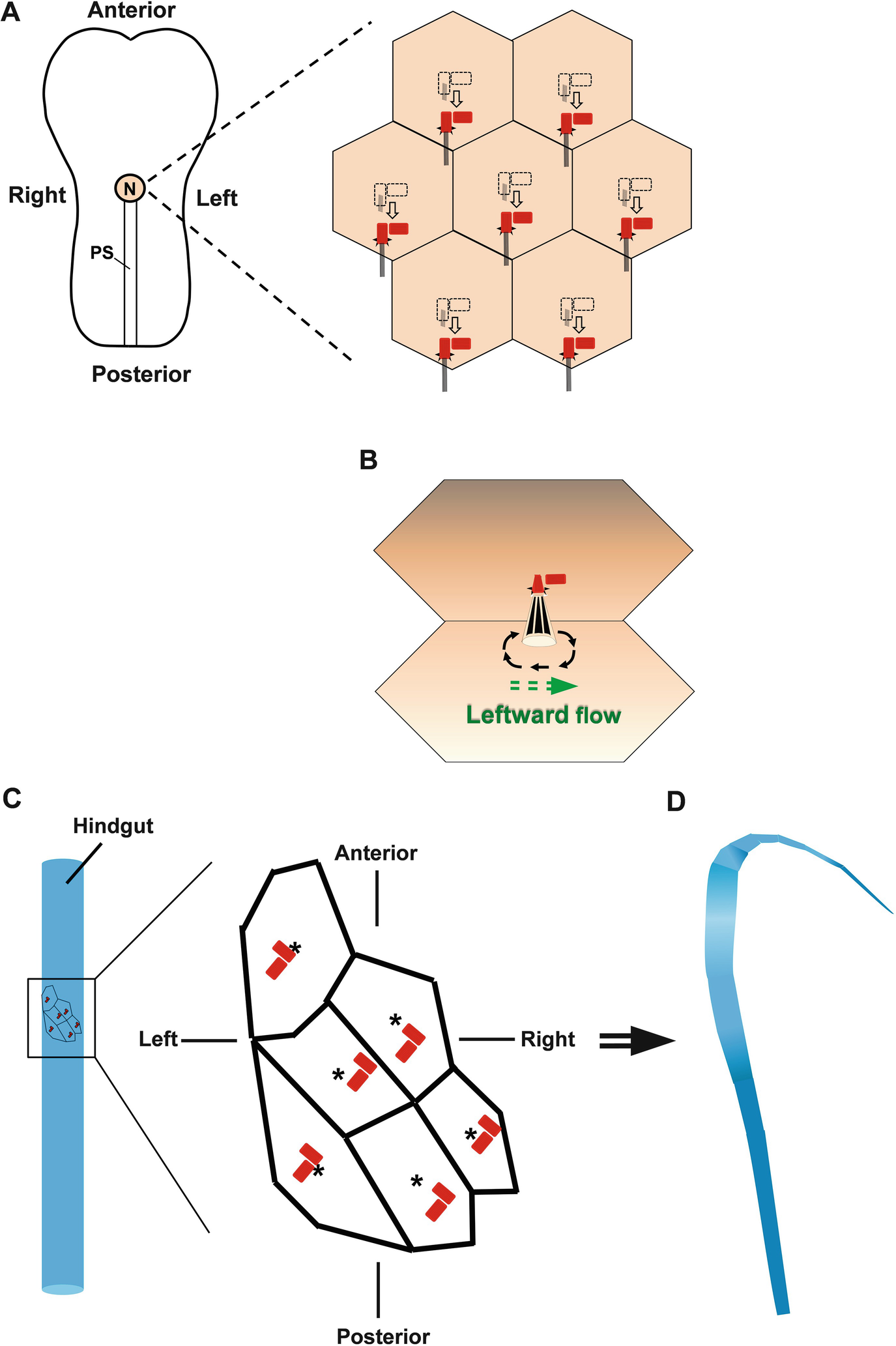 Positioning of the Centrosome and Golgi Complex | SpringerLink