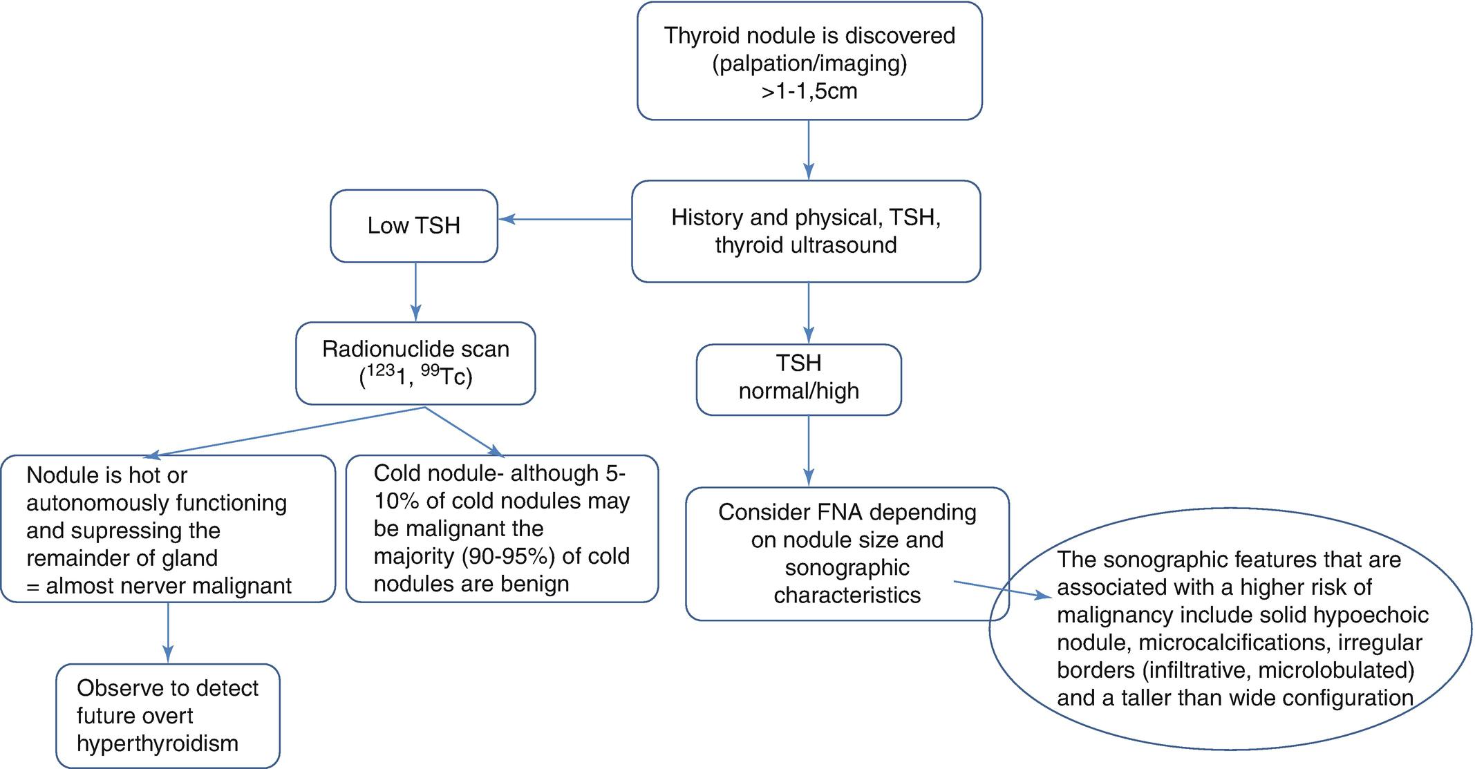 The Thyroid Gland Springerlink
