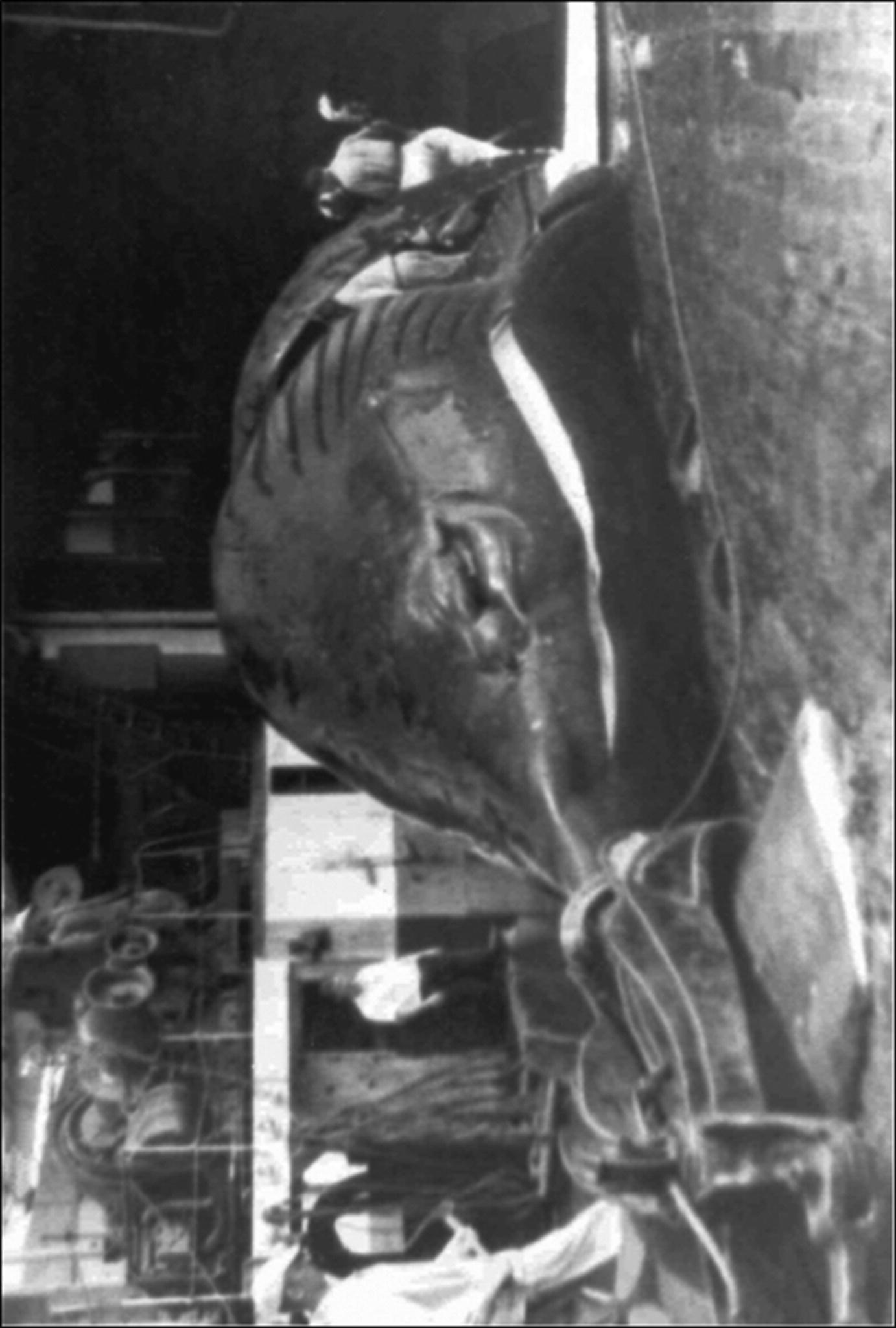 Biology Of Reproduction Of Cetaceans Springerlink
