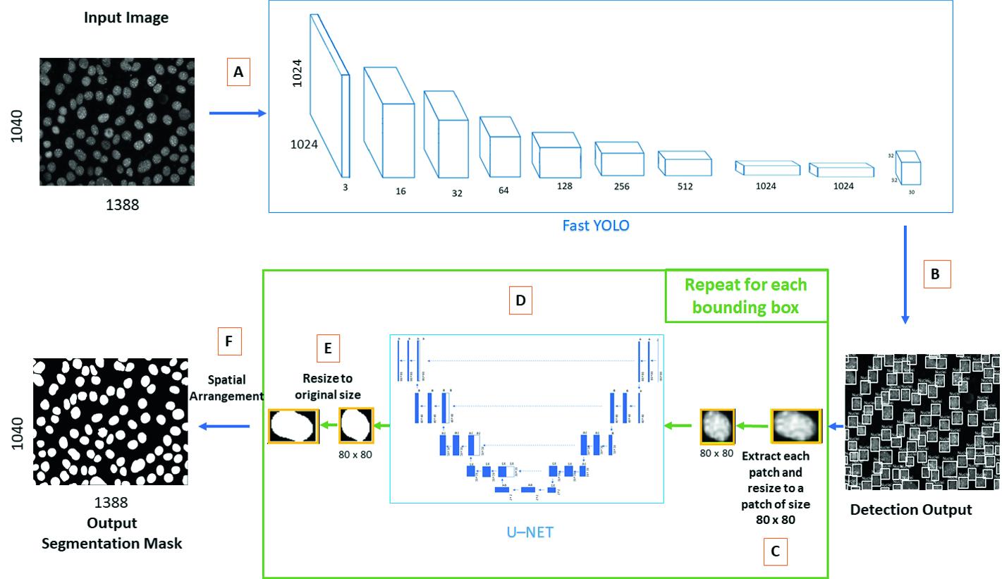 Segmentation of Cell Nuclei in Fluorescence Microscopy