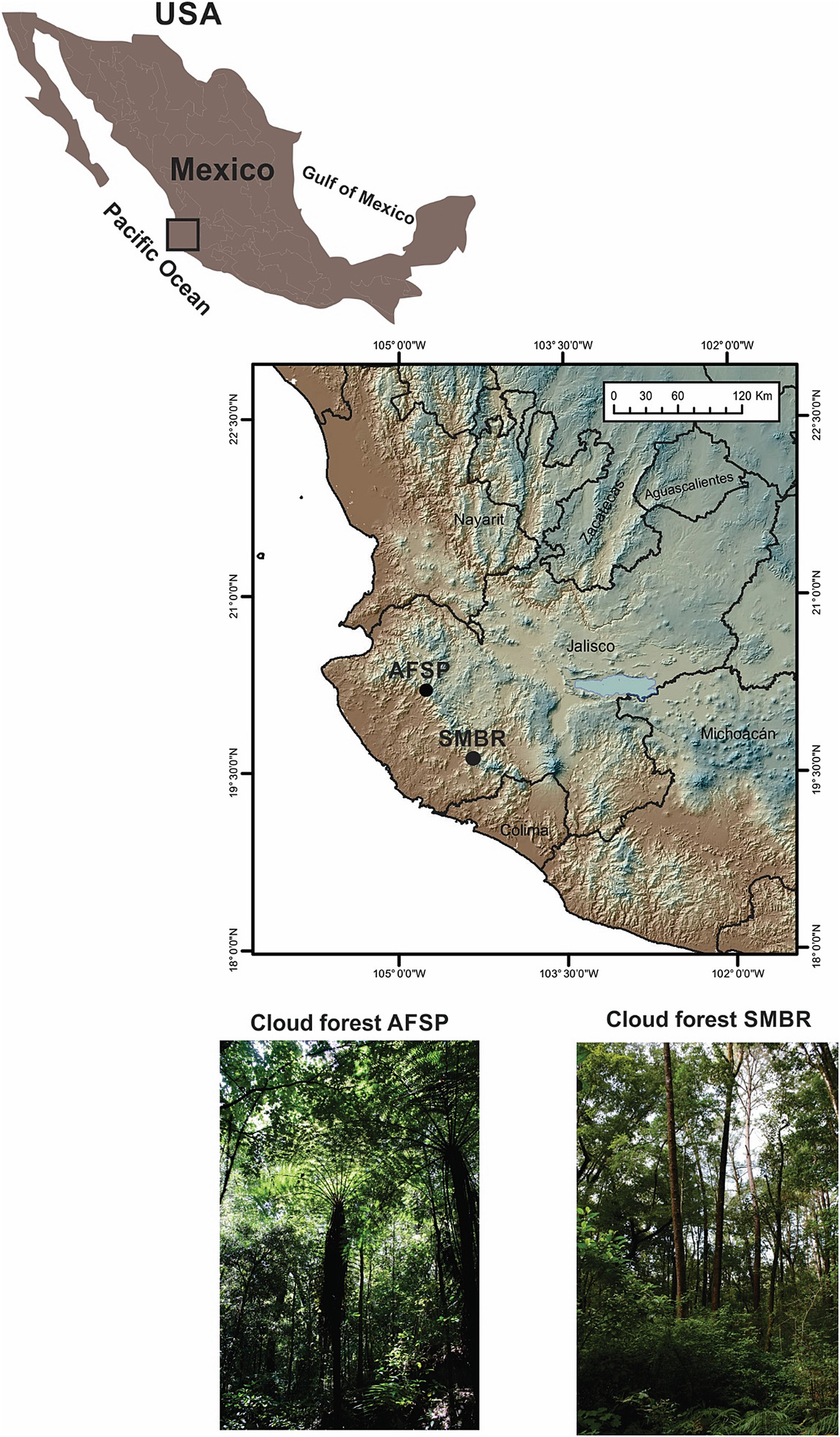 The Environment of Ancient Cloud Forests in the Mexican ... on