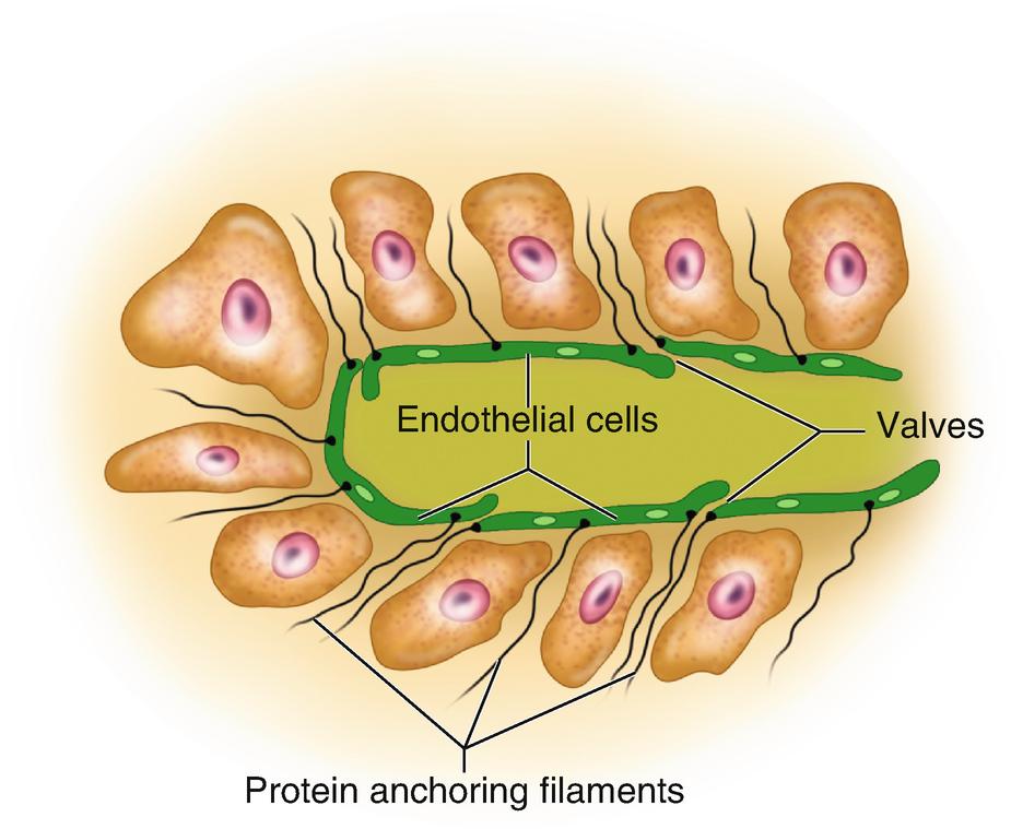 todico varicose de la venele varicoase