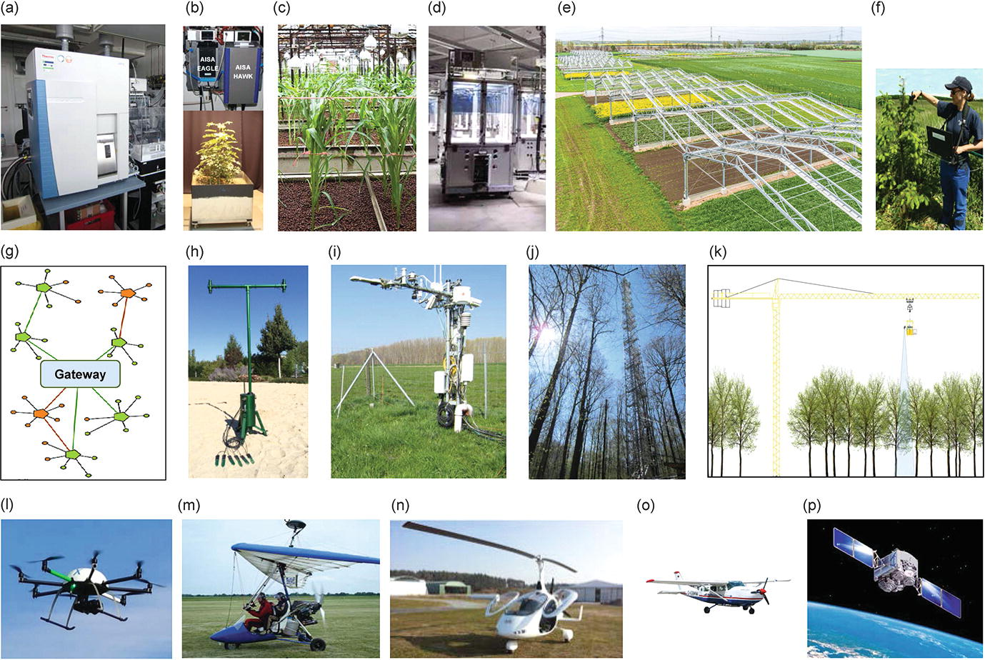 A Range of Earth Observation Techniques for Assessing Plant ...