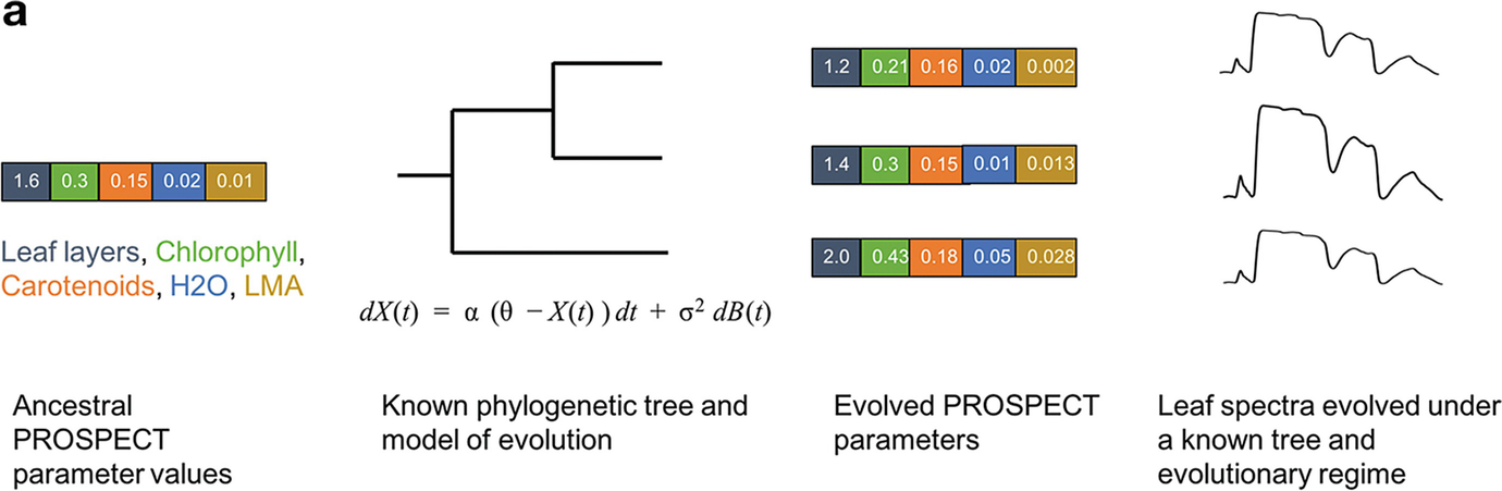 Linking Leaf Spectra to the Plant Tree of Life | SpringerLink