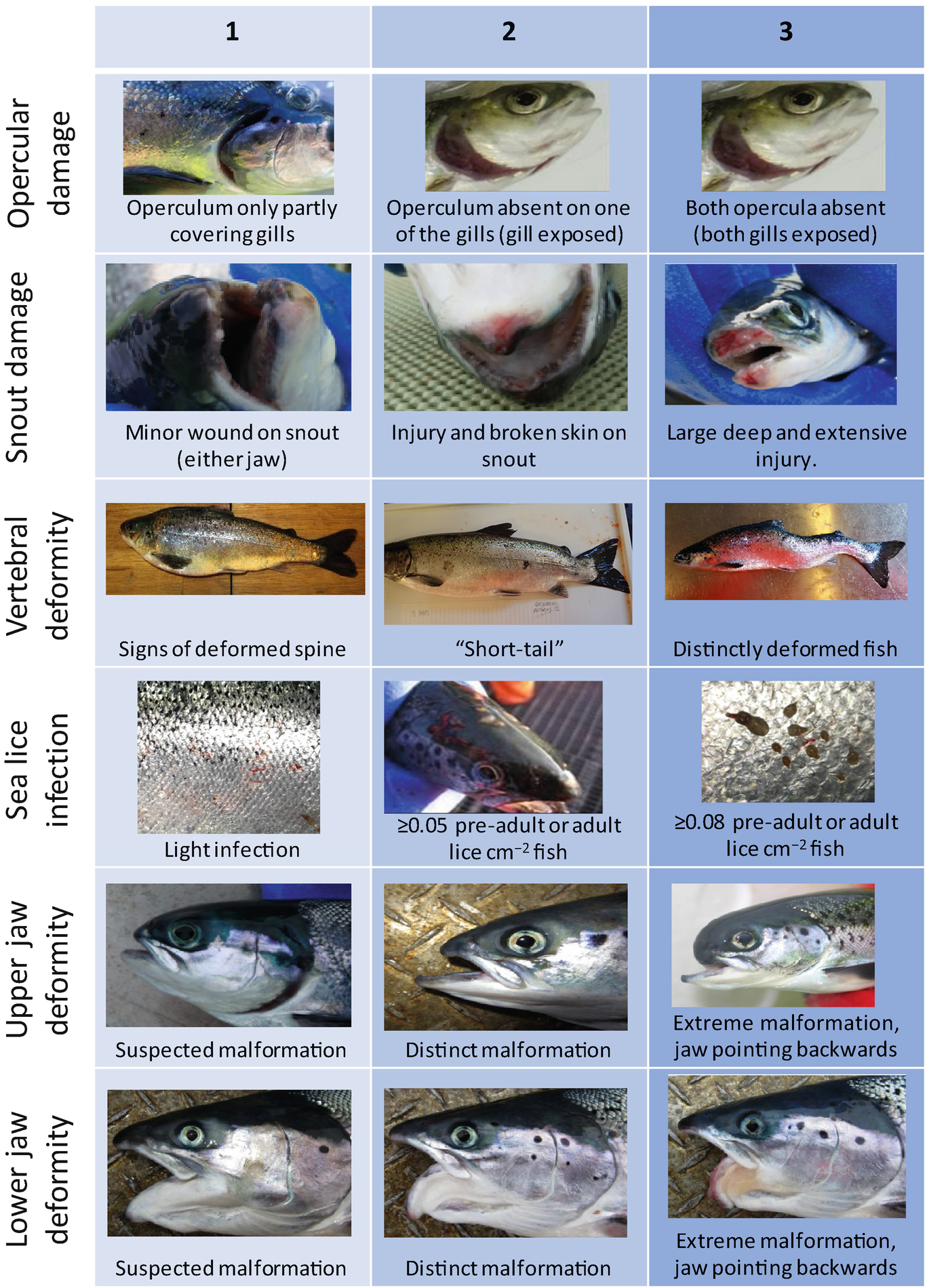 Assessing Fish Welfare In Aquaculture   SpringerLink