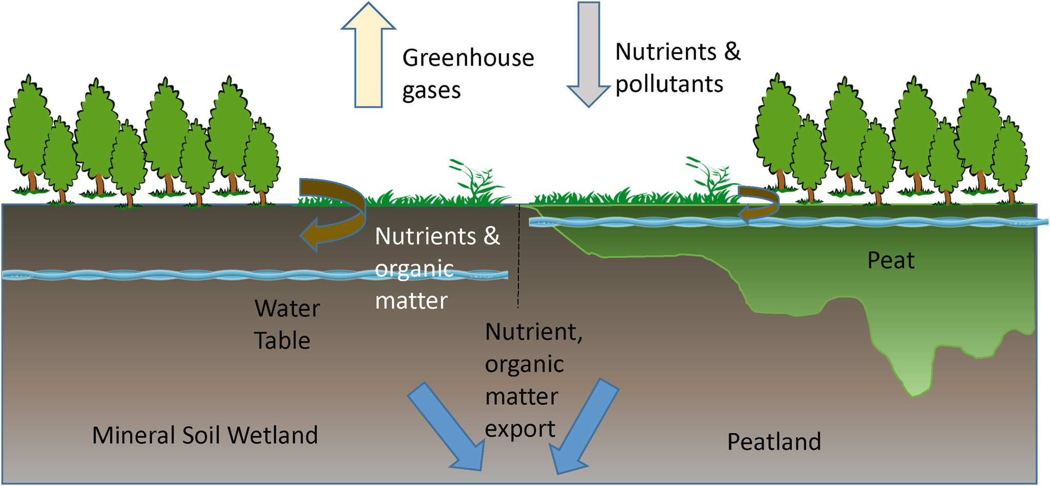 Wetland and Hydric Soils   SpringerLink