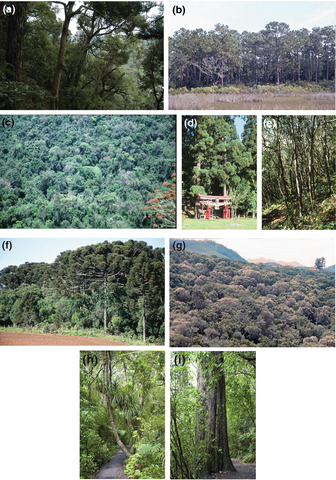 Zonal Vegetation Of The Subtropical Warm Temperate Zone With Year Round Rain Springerlink