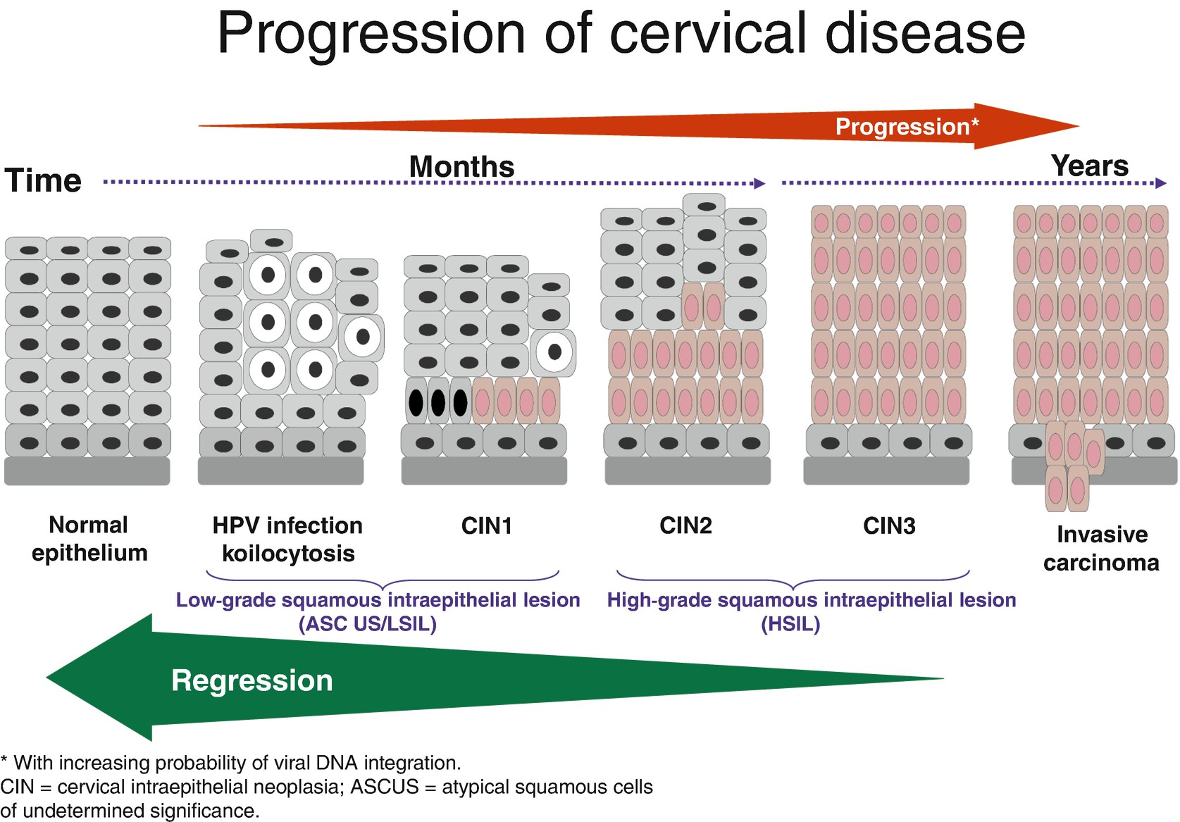 Condyloma (HPV) pénisz diagnosztikája és kezelése-STD szűrés - A condyloma megelőzése férfiaknál