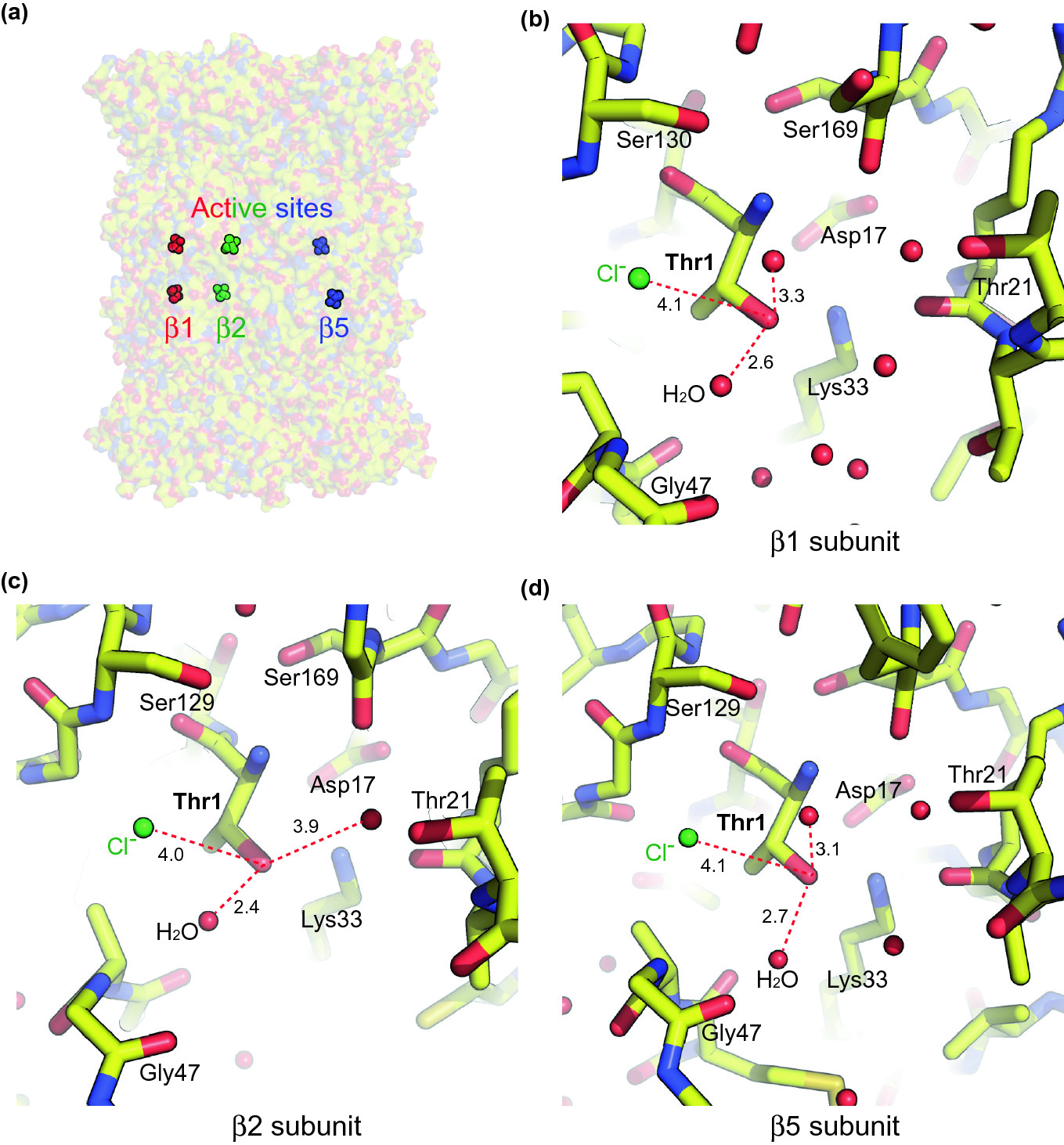Structure, Dynamics and Function of the 26S Proteasome | SpringerLink