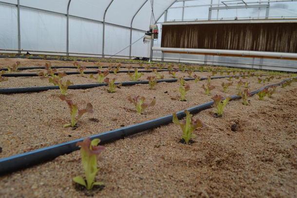 Hydroponic Irrigation Systems | SpringerLink