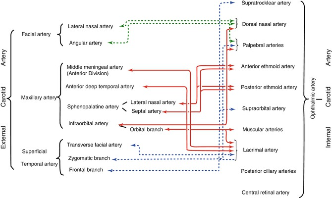 The Ophthalmic Artery | SpringerLink