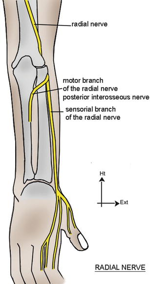 Entrapment Syndromes of the Radial Nerve | SpringerLink