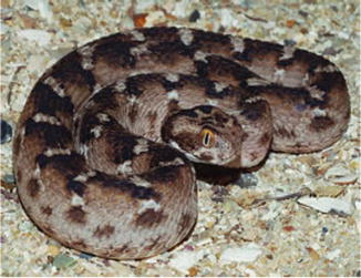 Asian snakes springerlink 7 fandeluxe Images