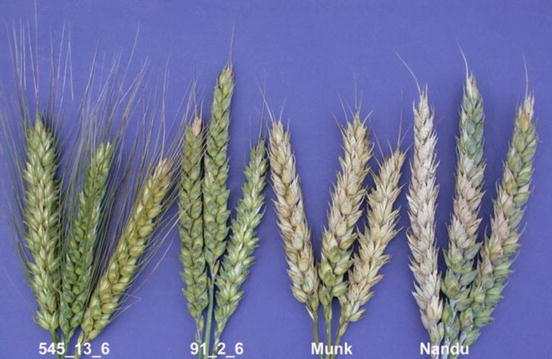 Breeding strategies for improving plant resistance to diseases open image in new window fandeluxe Gallery
