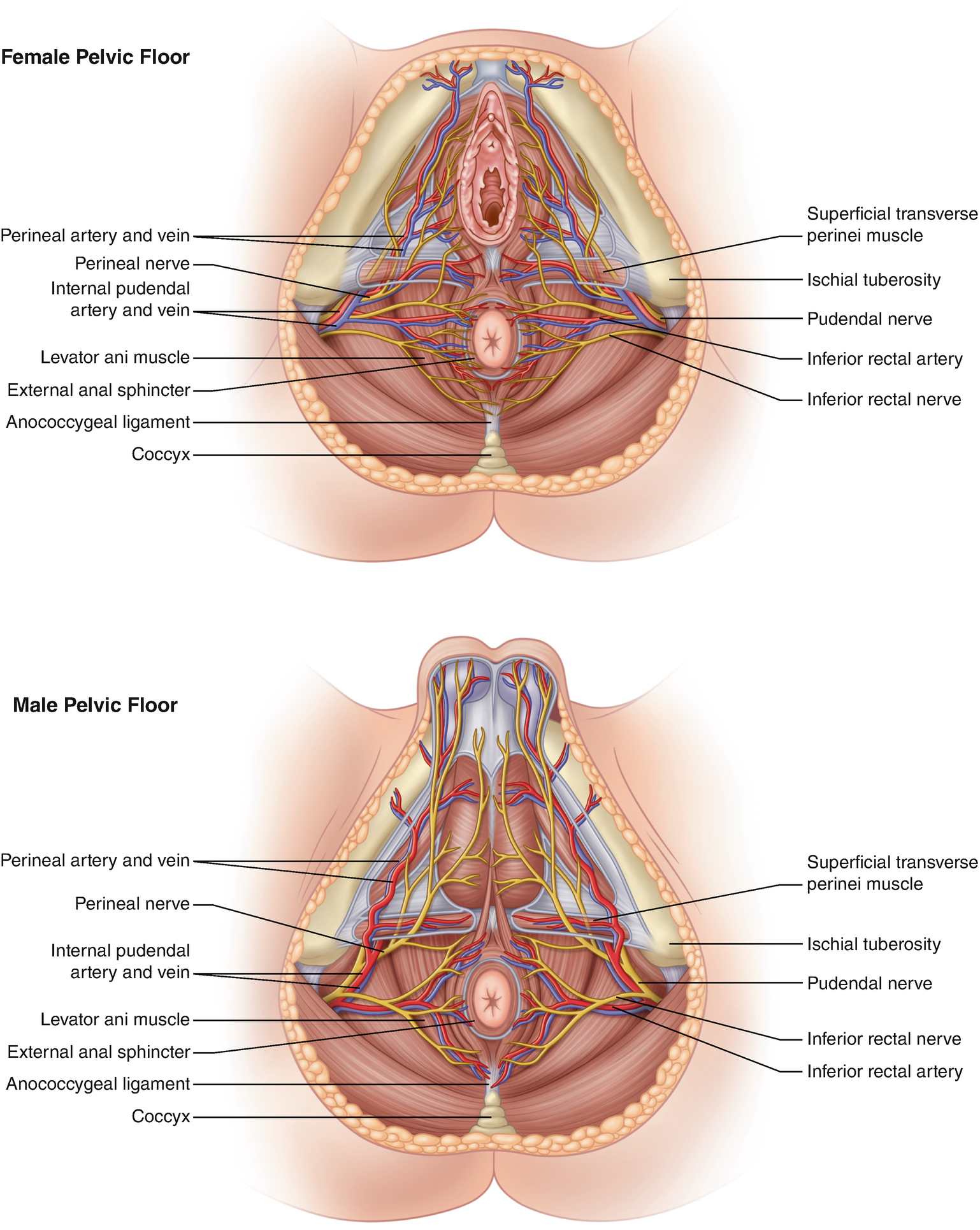 Anatomy And Embryology Of The Colon Rectum Anus Springerlink Diagram 88 Internal Structure Blood Flow Through Heart Open Image In New Window