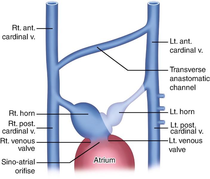 Cardiac Abnormalities | SpringerLink
