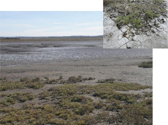 Coastal environments in the baha blanca estuary argentina open image in new window fandeluxe Images