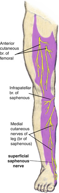 Distal Saphenous Nerve Entrapment | SpringerLink