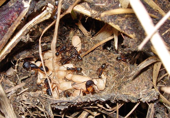 Blueprints of Termite and Ant Nests | SpringerLink