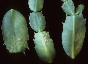 parazita pálya a protozoonokon fergus vízben