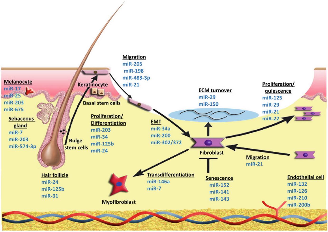 microRNA Modulation | SpringerLink