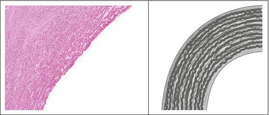 The Cardiovascular System Springerlink