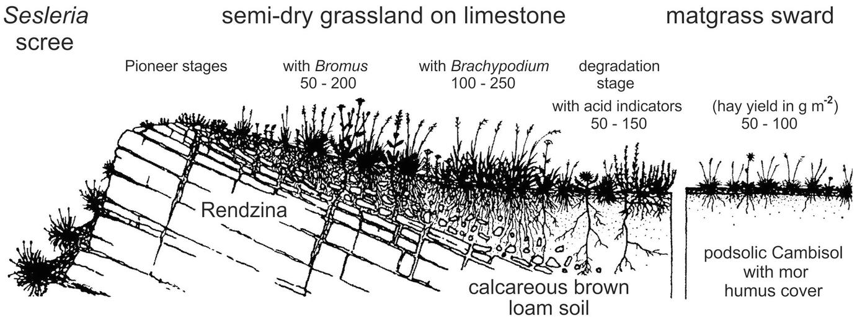 Nutrient-Poor Dry Grasslands | SpringerLink