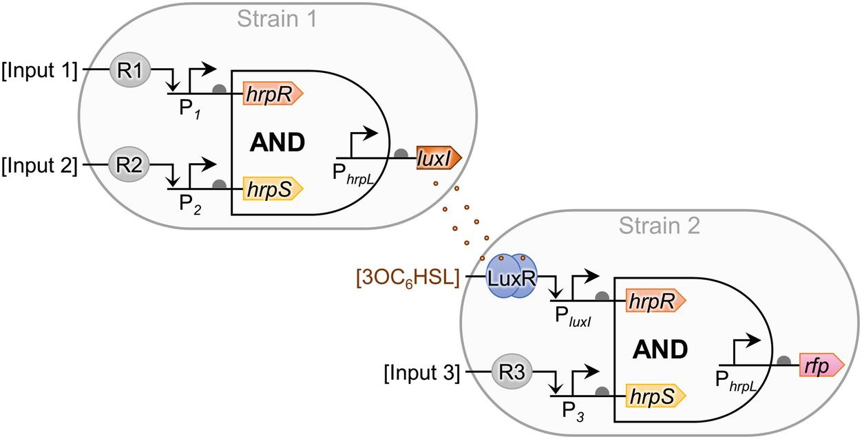 Engineering Prokaryote Synthetic Biology Biosensors | SpringerLink