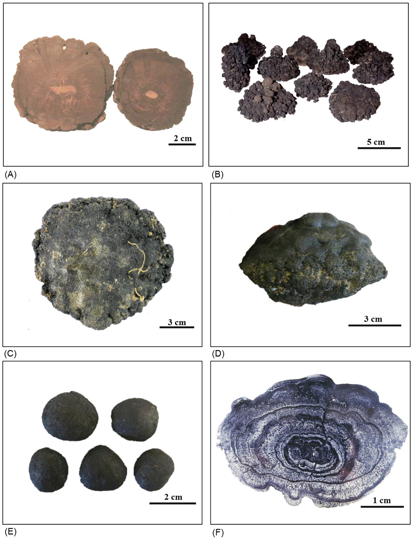 Composition Formation And Occurrence Of Polymetallic Nodules