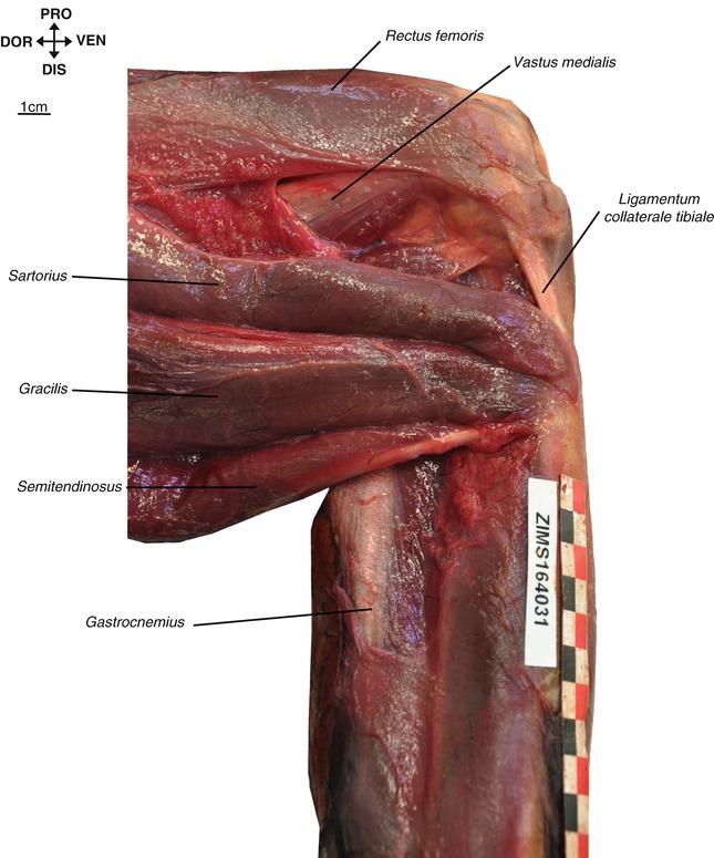 Schön Löcher Menschliche Anatomie Und Physiologie 12. Ausgabe ...