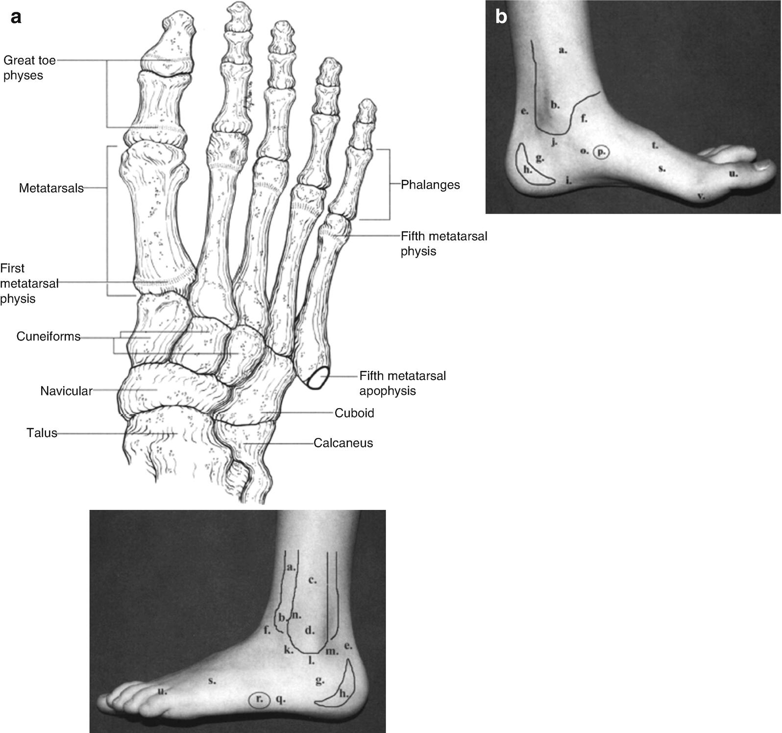 Foot And Ankle Injuries Springerlink