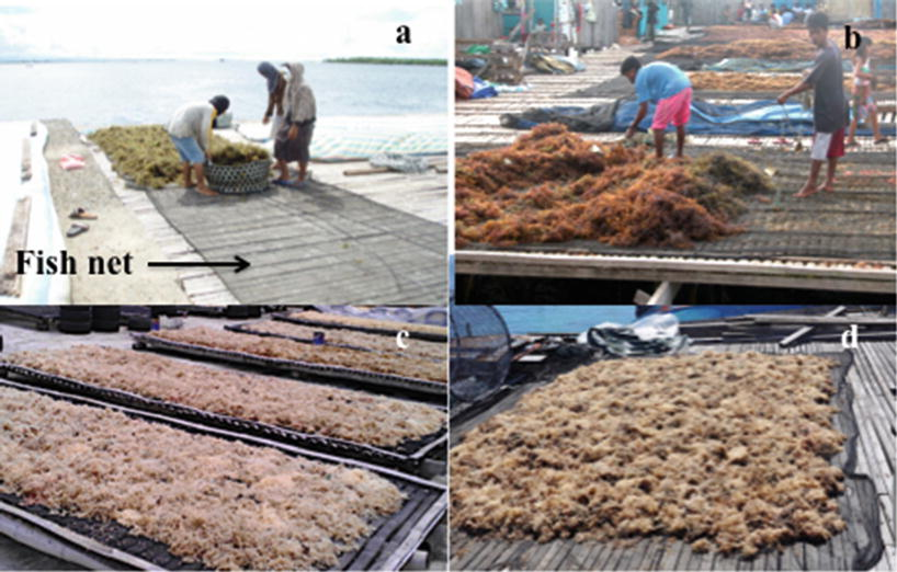 Post-Harvest Handling of Eucheumatoid Seaweeds | SpringerLink